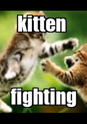 kitten  fighting - Personalised Poster A1 size