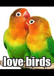 love birds - Personalised Poster A4 size