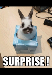 SURPRISE ! - Personalised Poster A4 size