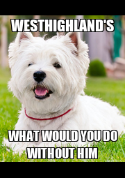 WESTHIGHLAND'S WHAT WOULD YOU DO WITHOUT HIM - Personalised Poster A1 size
