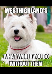 WESTHIGHLAND'S WHAT WOULD YOU DO WITHOUT THEM - Personalised Poster A4 size