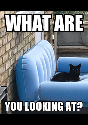 WHAT ARE YOU LOOKING AT? - Personalised Poster A1 size