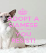 ADOPT A SIAMESE HOW CAN YOU RESIST! - Personalised Poster A1 size