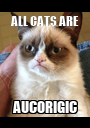 ALL CATS ARE AUCORIGIC - Personalised Poster A1 size