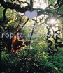 Karen's Tropical Rain Forest Project  (;  - Personalised Poster A1 size