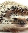 KEEP CALM AND DEVOTE YOUR LIFE TO HEDGEHOGS - Personalised Poster A1 size