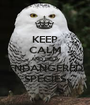 KEEP CALM AND HELP ENDANGERED SPECIES - Personalised Poster A1 size