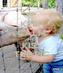 KEEP CALM AND KISS THE PIG - Personalised Poster A1 size
