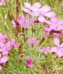 KEEP CALM AND Like Gabija - Personalised Poster A1 size