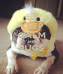 KEEP CALM AND PUGS  - Personalised Poster A1 size
