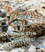 KEEP CALM AND Save the Ocelots! - Personalised Poster A1 size