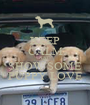 KEEP CALM AND SHOW SOME PUPPY LOVE - Personalised Poster A1 size