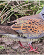 KEEP CALM AND VOTE YES FOR SPRING HUNTING - Personalised Poster A1 size