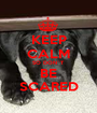 KEEP CALM SO DON`T BE SCARED - Personalised Poster A1 size