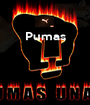 Pumas     - Personalised Poster A1 size