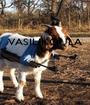 VASILIKOULA     - Personalised Poster A1 size