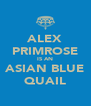 ALEX PRIMROSE IS AN ASIAN BLUE QUAIL - Personalised Poster A4 size