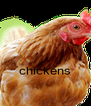 chickens  - Personalised Poster A4 size