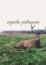 expecto patronum     - Personalised Poster A4 size