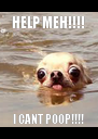 HELP MEH!!!! I CANT POOP!!!! - Personalised Poster A4 size