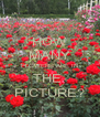 HOW MANY FLOWERS ARE IN THE  PICTURE? - Personalised Poster A4 size