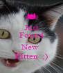 Just Found A New  Kitten  ;) - Personalised Poster A4 size