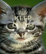 KEEP CALM AND CARRY cat - Personalised Poster A4 size