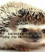 KEEP CALM AND DEVOTE YOUR LIFE TO HEDGEHOGS - Personalised Poster A4 size