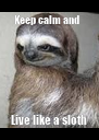 Keep calm and   Live like a sloth - Personalised Poster A4 size