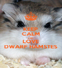 KEEP CALM AND LOVE DWARF HAMSTES - Personalised Poster A4 size