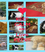 KEEP CALM AND Love PETS!!! - Personalised Poster A4 size