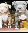KEEP CALM AND LOVE PITBULLS - Personalised Poster A4 size
