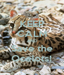 KEEP CALM AND Save the Ocelots! - Personalised Poster A4 size