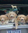KEEP CALM AND SHOW SOME PUPPY LOVE - Personalised Poster A4 size