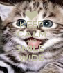 KEEP CALM AND SMILE  WIDE - Personalised Poster A4 size