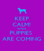 KEEP CALM! NINJA PUPPIES  ARE COMING - Personalised Poster A4 size