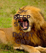 KEEP  STILL AND DONT CRY - Personalised Poster A4 size