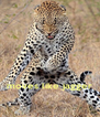 moves like jagger - Personalised Poster A4 size