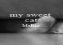 my sweet  cat MaRio   - Personalised Poster A4 size