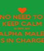 NO NEED TO  KEEP CALM WHEN AN  ALPHA MALE  IS IN CHARGE - Personalised Poster A4 size
