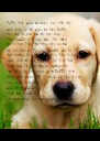 People think dogs are dogs, but what they  don't know is that dogs are like people they care for you and are very sweet. They cuddle with you, and  they take - Personalised Poster A4 size
