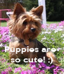 Puppies are  so cute! ;) - Personalised Poster A4 size
