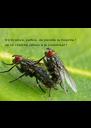 S'il m'arrive, parfois, de prendre la mouche ! Je ne cherche jamais à la sodomiser ! - Personalised Poster A4 size