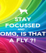 STAY FOCUSSED AND... OMG, IS THAT A FLY ?! - Personalised Poster A4 size