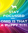 STAY FOCUSSED AND... OMG IS THAT A PUPPY ?!?! - Personalised Poster A4 size