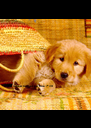 Te iubesc numai pe tine :* <3          Cel mai mare defect al cainilor,          e ca iubesc orice jigodie de om - Personalised Poster A4 size