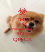 THIS IS A POMERANIAN RUN QUICK - Personalised Poster A4 size