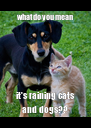 what do you mean it's raining cats and dogs?? - Personalised Poster A4 size
