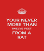 YOUR NEVER MORE THAN TWELVE FEET FROM A RAT - Personalised Poster A4 size