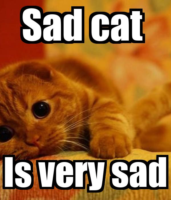 cat in asl